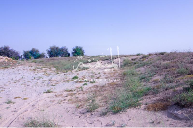 للبيع مزرعة في وادي العمردي كبيرة للبيع في دبي